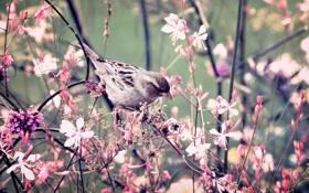 Обои листья, цветы, ветки, природа, птица, растение, лепестки