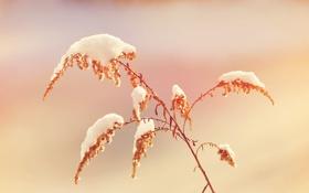 Обои трава, снег, природа, grass, nature, snow, 2560x1600