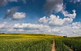 Картинка дорога, поле, лето, небо, солнце, облака, цветы