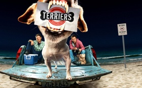 Обои terriers, beach, dogs