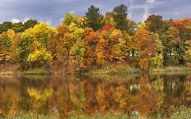Картинка осень, листья, деревья, река, желтые, Санкт-Петербург, Россия