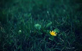 Обои цветок, желтый, трава, зеленвй