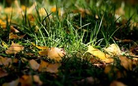Картинка листья, осень, трава