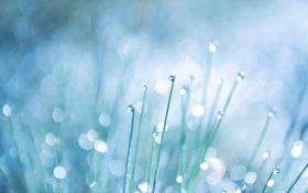 Картинка трава, капли, роса, bokeh, drops