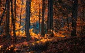 Обои осень, лес, деревья, природа, Deutschland