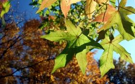 Обои осень, листья, деревья, листва, Природа, Лес, Парк