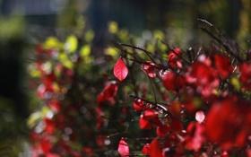 Картинка листья, макро, деревья, красный, фон, дерево, розовый