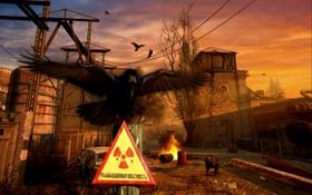Обои росток, радиация, stalker, ворона