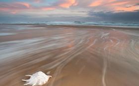 Картинка море, волны, пляж, раковина