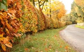 Картинка дорога, осень, листья, деревья, природа, кусты