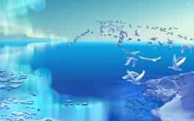 Обои холод, море, птицы, северное сияние, арт, льдины, белые