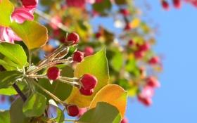 Обои Листья, Весна, Макро, Небо, Цветы, Ветка, Фото
