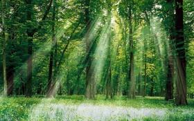 Картинка лес, трава, пейзаж, солнце, листва, листья, обои
