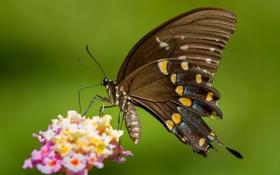 Картинка цветок, узор, бабочка, растение, крылья, насекомое