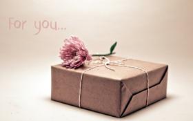Обои цветок, макро, коробка, подарок