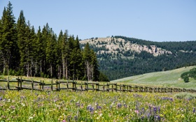 Картинка поле, лето, пейзаж, горы, забор