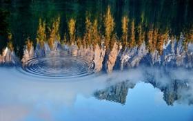 Картинка лес, вода, деревья, круги, горы, озеро, отражение