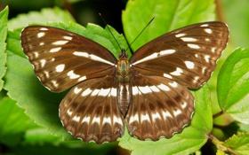 Картинка бабочка, itchydogimages, крылья, макро