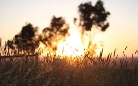 Картинка поле, небо, трава, макро, деревья, природа, дерево