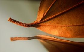 Обои лист, отражение, autumn, осенний