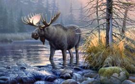 Картинка александр, природа, автор, лось, холст, картина