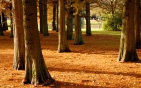 Обои солнце, деревья, парк, река, фокус, тени, кусты