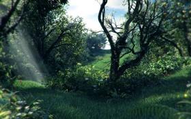 Картинка лес, трава, лучи, деревья, заросли, растение