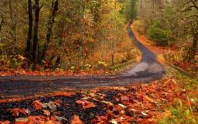 Обои дорога, осень, лес, листья, деревья, природа, парк