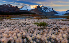 Обои небо, снег, цветы, горы, озеро, луг, Alberta