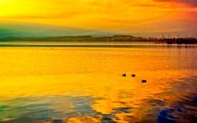 Картинка небо, облака, озеро, птица, лодки, утка