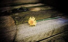 Обои цветок, одуванчик, ступеньки