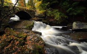 Картинка осень, лес, листья, мост, река, камни, поток