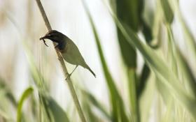 Обои трава, природа, птица, червяк, зимородок