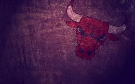 Обои бык, Chicago Bulls, кожа, минимализм