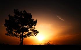 Обои трава, деревья, пейзажи, свет, закат солнца, вечер, дерево