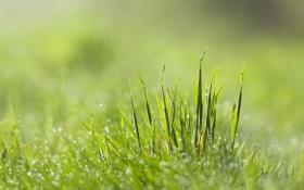 Обои трава, листья, капли, роса, блики