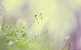 Картинка зелень, трава, макро, свет, природа, green, нежность
