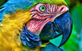 Обои птица, попугай, ара