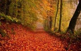 Обои дорога, осень, природа, листва