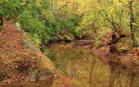 Обои сша, paulding county, парк, лес, деревья, речка