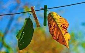 Обои два, autumn fades, лстики