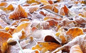 Обои иней, осень, листья, кристаллы