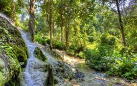 Картинка зелень, лес, деревья, ручей, мох, кусты, Austria