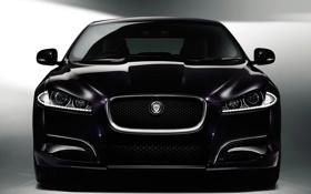 Картинка фиолетовый, морда, темный, purple, Jaguar XF