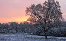 Обои зима, снег, дерево, рассвет, утро