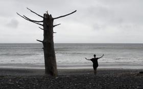 Картинка море, девушка, поза, дерево