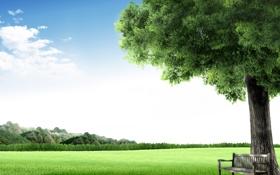 Обои зелень, небо, природа, город, пространство, дерево, воздух