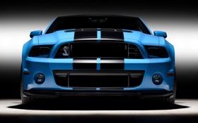Обои авто, фото, обои, тачки, ford, shelby, форд