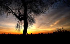 Обои закат, над, дерево, одинокое, городом