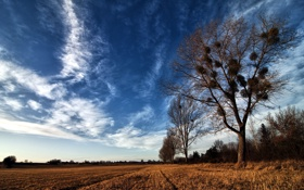 Картинка поле, дерево, гнёзда